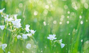 輝く白い花