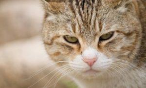 緊張した猫