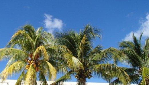 ココナッツパウダーは食物繊維豊富で便秘に効果あり!?