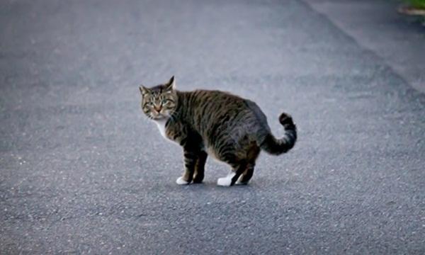 孤独なネコ