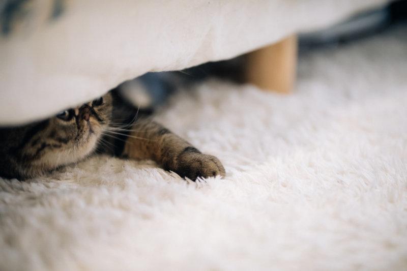 ベッドの下のネコ
