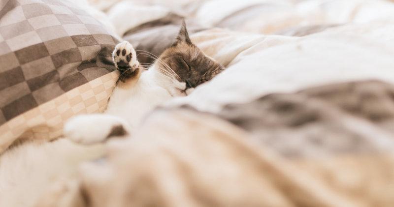 心地良い眠り