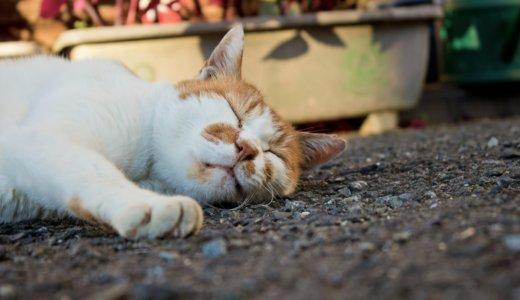 睡眠負債は脳の働きを衰えさせる。質の良い睡眠をとるには?