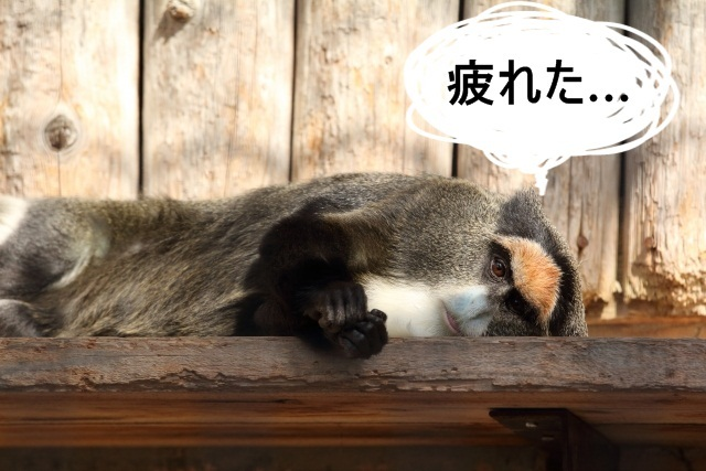 疲れたサル